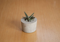 cement_pots (4 of 23)